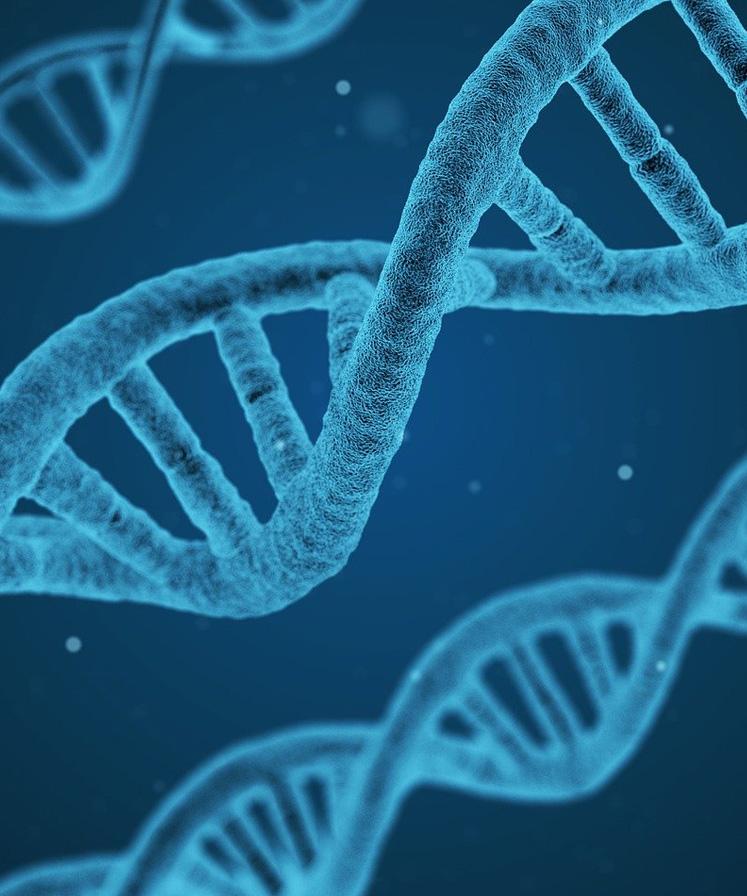 私たちの根底にある考え方「正常分子栄養学®」